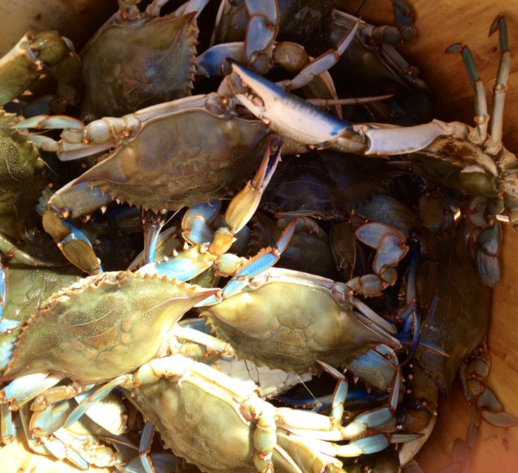 how to cook blue claw crabs