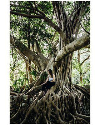 NOTES DE VOYAGE 08 ~ L'Arbre Les Mayas le priaient comme un dieu, Reliant le ciel et la terre. Le figuier des banians, Racines par centaines, Troncs par dizaines. S'assoir en-dessous pour apaiser ses peurs, Méditer, Contempler. Instants du Yucatan. #Mexique @thehaciendas ⋆ TRAVEL NOTES 08 ~ The Tree The Maya begged it as a god, Connecting sky and earth. The banyan tree, Hundred of roots, Stems by dozen. Sit below to allay fears, Meditate, Contemplate. Moments of Yucatan.