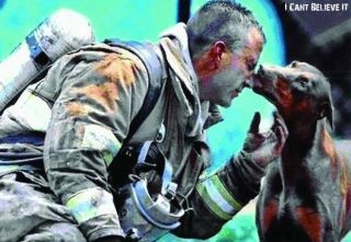 """This photograph shows a red Doberman kissing an exhausted fireman. He had just saved her from a fire in her house, rescuing her by carrying her out of the house into her front yard, while he continued to fight the fire. She is pregnant. The firefighter was afraid of her at first, because he had never been around a Doberman before. When he finally got done putting the fire out, he sat down to catch his breath and rest. A photographer from the Charlotte, North Carolina newspaper, """"The…"""