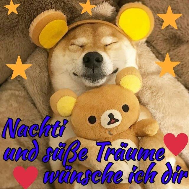 Gutenacht Bild Hund Gute Nacht Nacht Gute Nacht Grusse