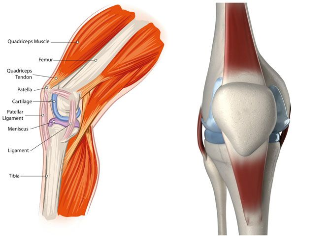 If you have patellar tendinitis, here are the best exercises to help you rehab your injury and get back to the gym.