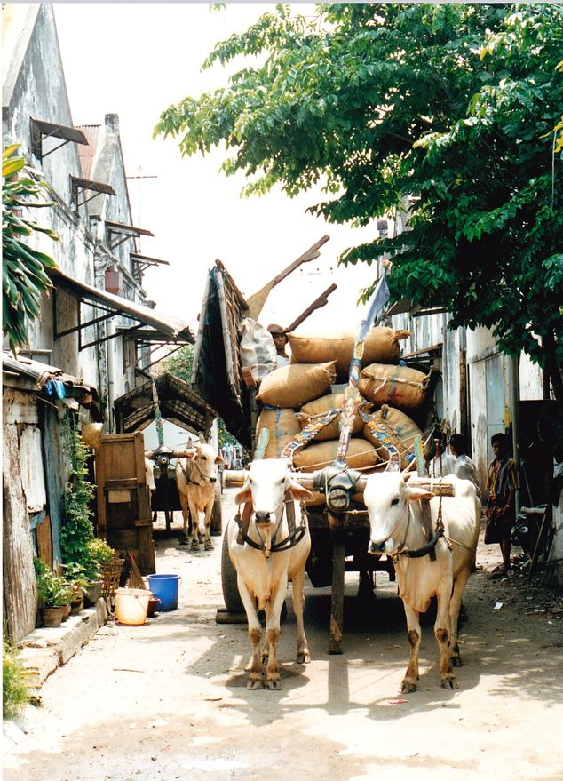 Ossenwagens (gemaakt in Soerabaja)