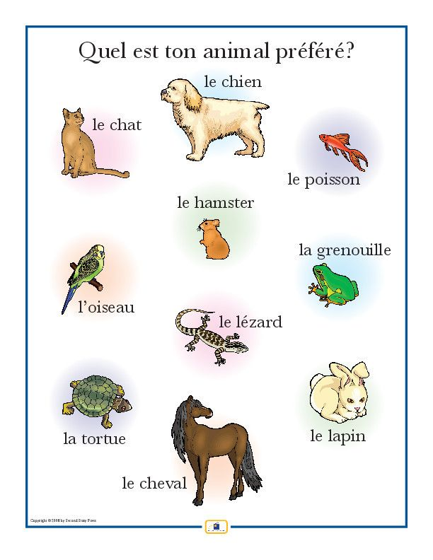 Introduce pet vocabulary with this colorful 18 x 24 in. poster that includes a free guide with teaching suggestions and practice worksheets.