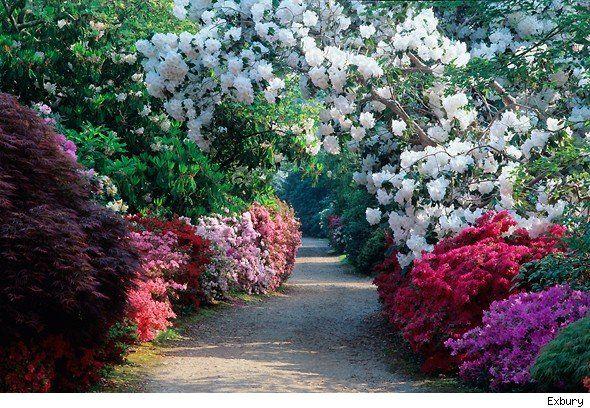 Exbury Gardens, New Forest England...Another beyond belief garden!