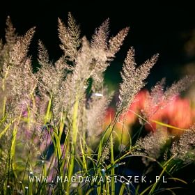 Magda Wasiczek / Collection_collection_arboretum-trojanow-wrzesie-2016