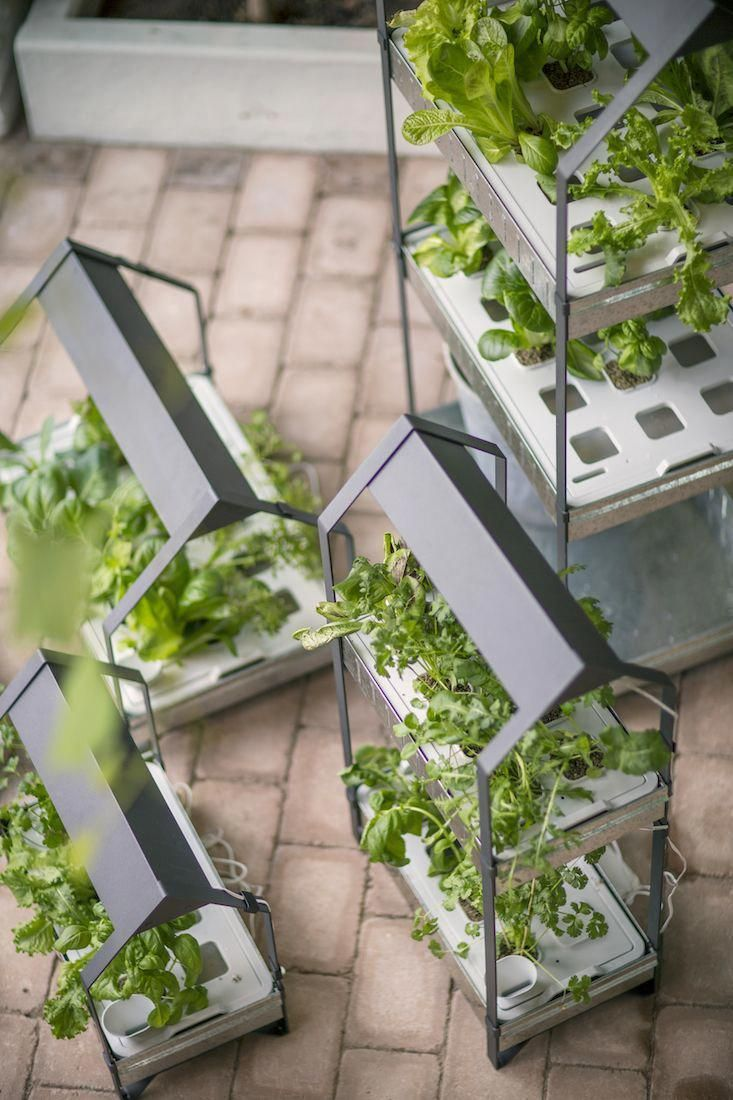Hydroponic Greenhouse With Images Hydroponic Gardening