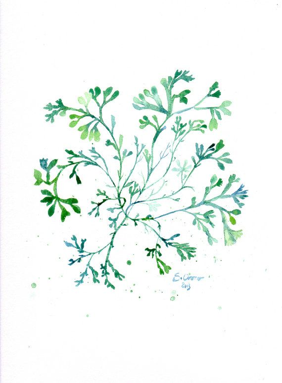 Algue verte -  Aquarelle originale, illustration botanique - Art mural vert émeraude, décoration de cuisine