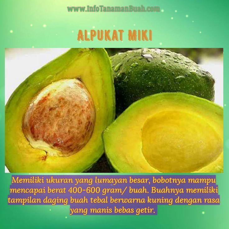 http://www.infotanamanbuah.com/manfaat/manfaat-alpukat-miki/    MANFAAT ALPUKAT MIKI – Buah alpukat merupakan jenis buah yang sangat mudah anda temukan di pasaran. Buah yang bentuknya lonjong dengan warna hijau tua atau coklat kemerahan ini tak hanya muda…