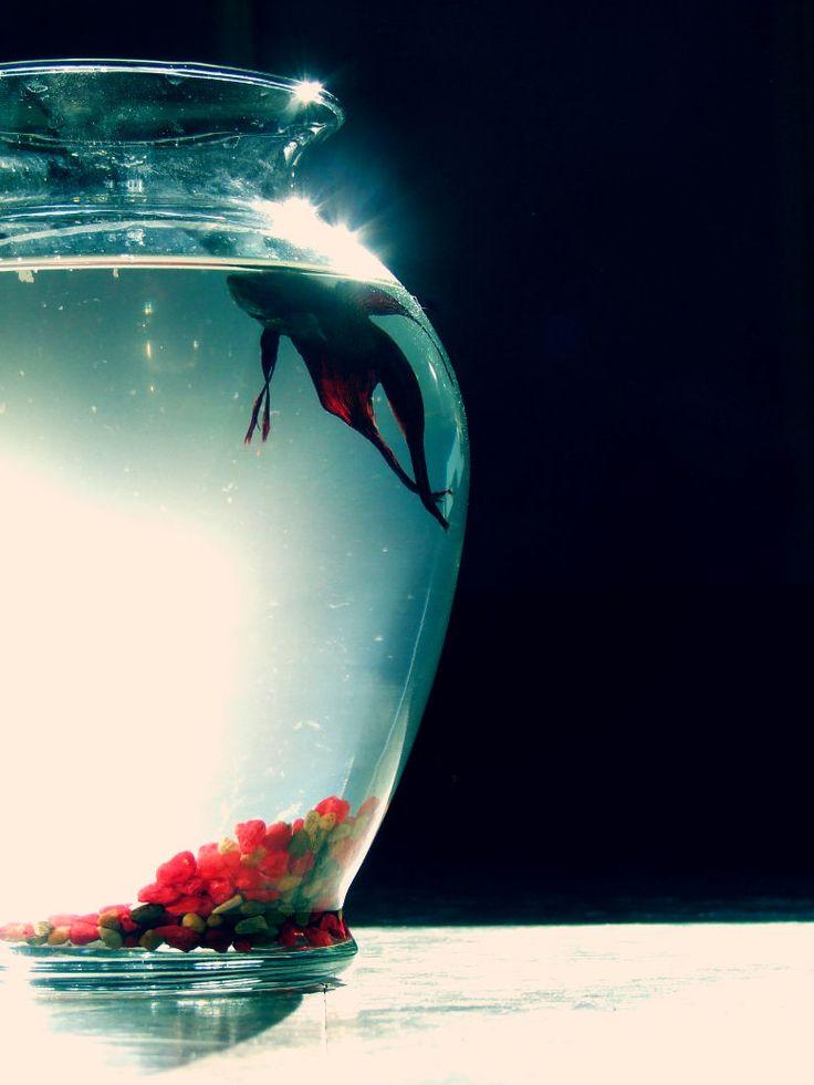 17 best betta bottle aquarium images on pinterest for Betta fish care water