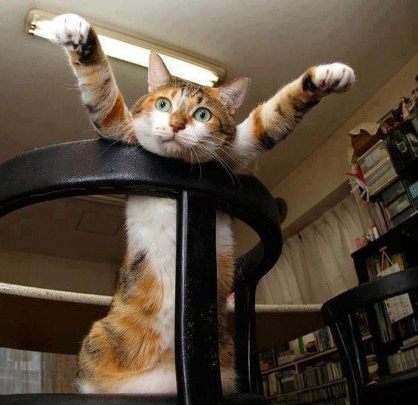 Открытку новый, позитивные картинки с надписями коты