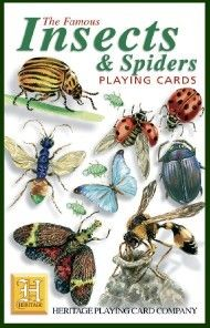 insects are the most successful animal This is the largest and most successful of the animal phyla,  that's just insects alone,  arthropods are the most easily identifiable of all the animals,.