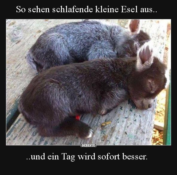 So sehen schlafende kleine Esel aus..   Lustige Bi…