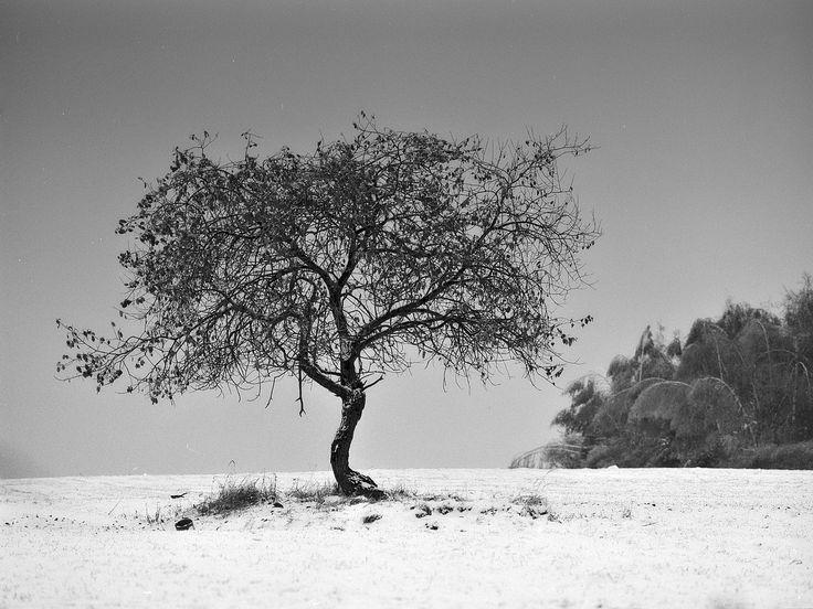 A tree?