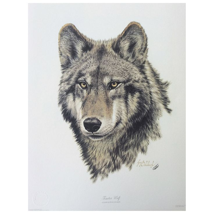 "Timber Wolf head print signed by artist Guy Goheleach. 20""h x 16""w."