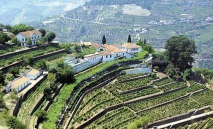 Il vino migliore del mondo? Un Porto - Corriere della Sera