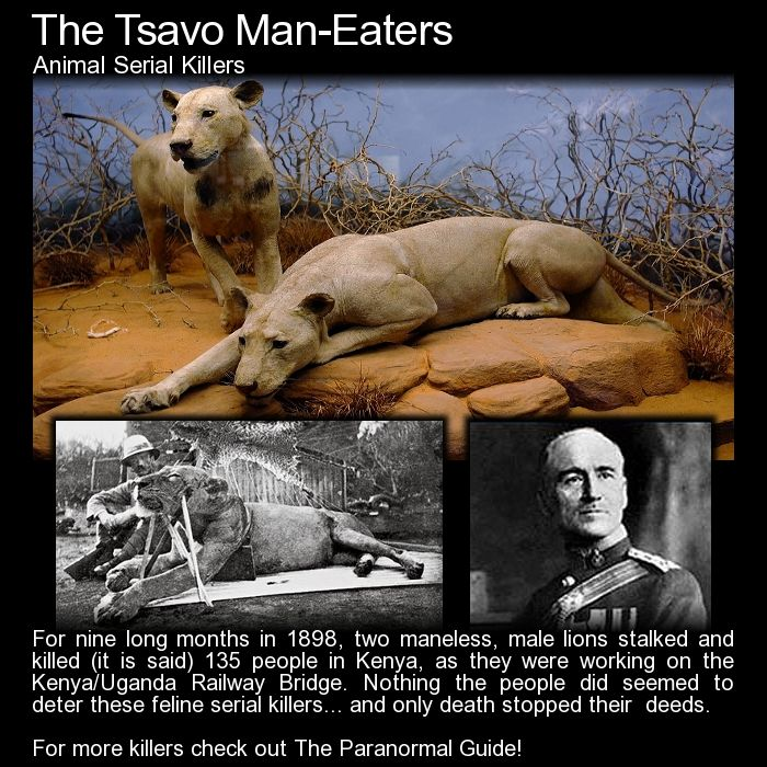 The Tsavo Man Eaters. The Ghost and the Darkness... read more here: http://www.theparanormalguide.com/blog/the-tsavo-man-eaters