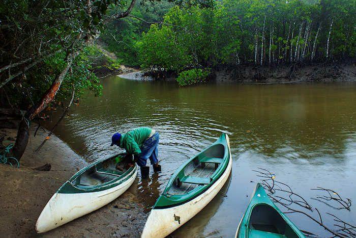 mangrove, umngazi river