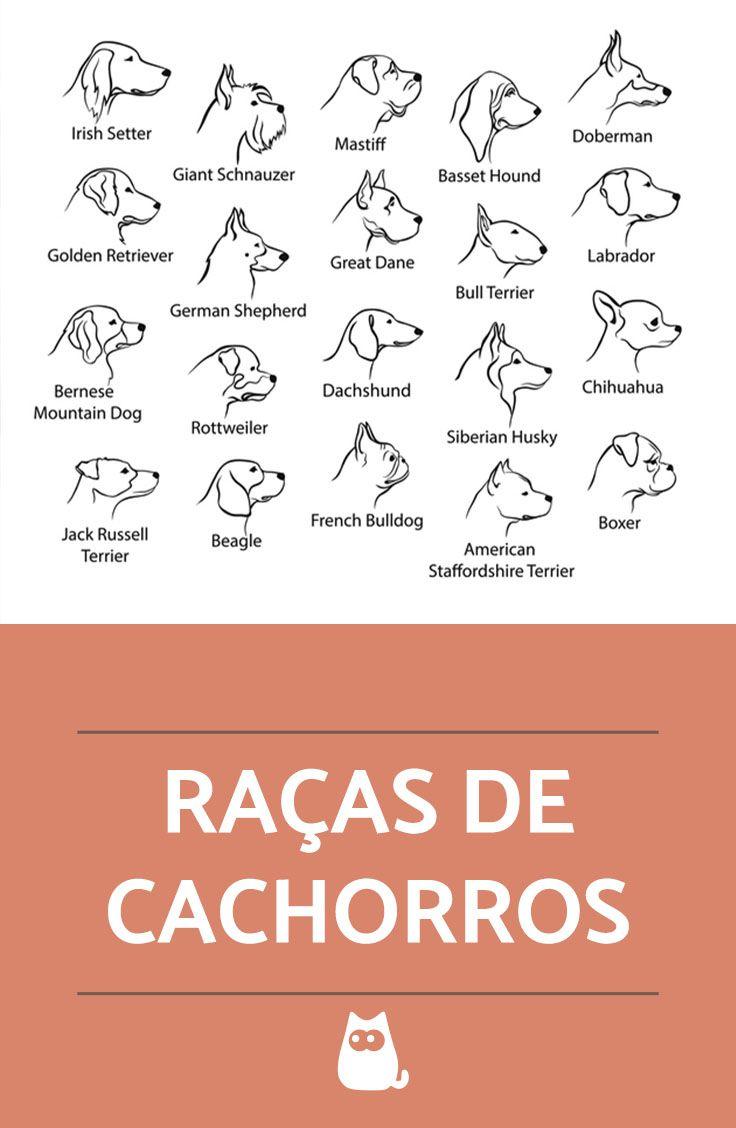 Descubra quais as características, cuidados e adestramento de cada uma das raças de cachorros!  #cachorros #cães #pets #raças #animais