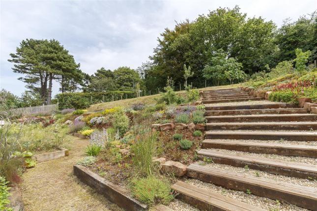 Modern terraced garden, Clevedon, Aug '17