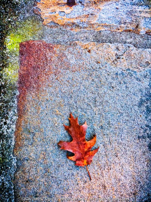 Brown leaf on sidewalk - ©Silvia Ganora Photography - All Rights Reserved  #bookcovers #leaves #still-life