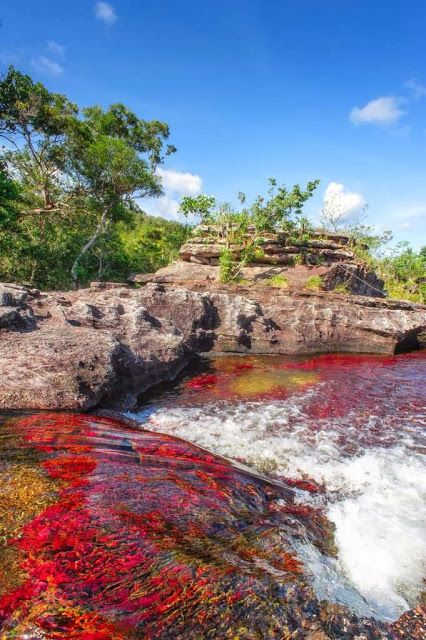 Descubre Tu Mundo : Destino: Caño Cristales, Colombia -descubre el mágico río de…