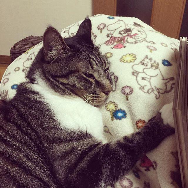 [2016.09.18] * 昨夜は一睡もできなかった。 眠いのに眠れない、すごく嫌だったー。 * よもぎはいつも寝てる。 * #猫 #愛猫 #双極性障害