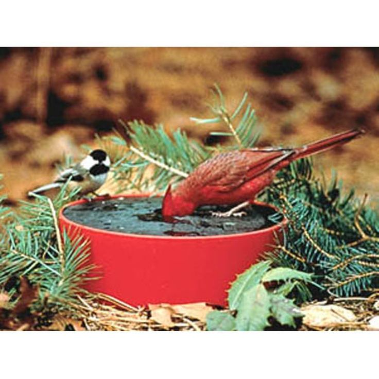Happy Bird Solar Sipper Heated Bird Bath - Bird Baths at Hayneedle