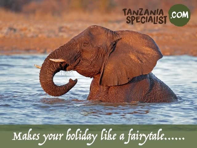 Wildlife safaris tours in Tanzania contact #TanzaniaSpecialist leading travel agency.