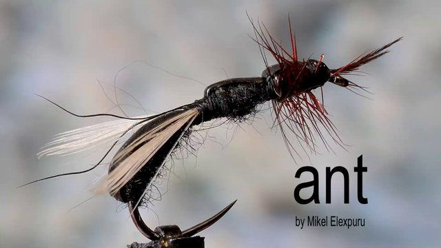 FLYMAGE FLY TYING 10 by Flymage Fly Fishing Magazine. How to tie a flying ant. Flymage Fly Tying Video Series: Chapter #10 ANT by Mikel Elexpuru.. Flymage Fly Fishing Magazine Serie de vídeos de montaje de moscas de Flymage Magazine: Capítulo #10 HORMIGA www.flymage.net Montaje de Mikel Elexpuru www.mikelfly.com