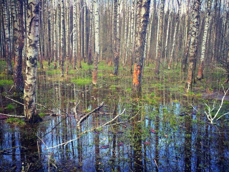 Весеннее пробуждение природы... #ВесеннийЛес #spring2017 #Russia