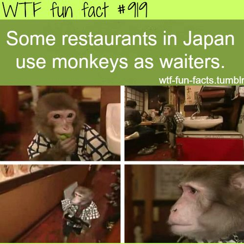 monkey waitersin Japan MORE OF WTF-FUN-FACTS are coming HERE funny and weird facts ONLY