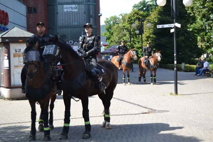 Police horses guarding a demonstration in Zilina 11.7.2015