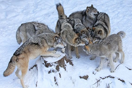 Canadian Geographic Photo Club - The Huddle