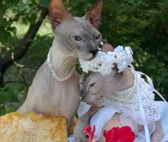 102 best animals getting married images on pinterest