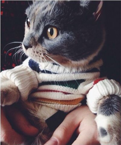 A cat in a sweater.- i wish my kitties would allow me to do this