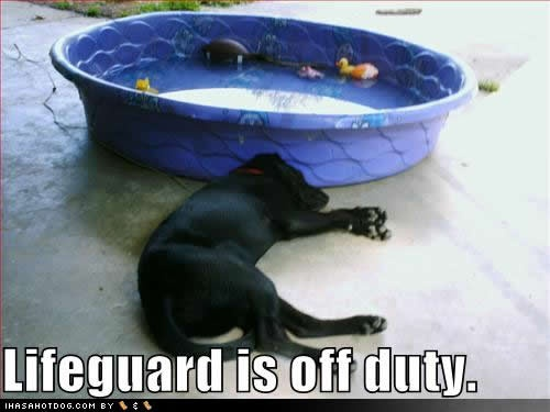 Funny Lifeguard Meme : Best lifeguard funnies images funny stuff