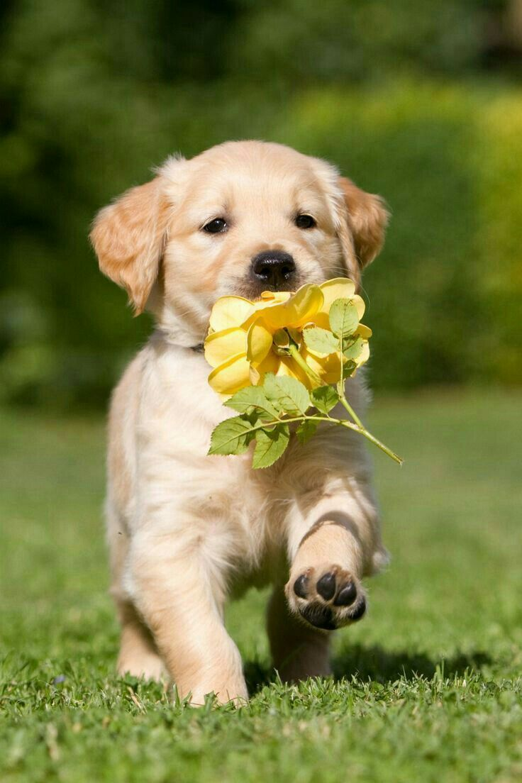 Woof Woof You Dropped A Flower Hog Ground Pinterest Puppies