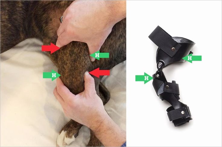 Surgery Not An Option? Dog Knee Braces Dog braces