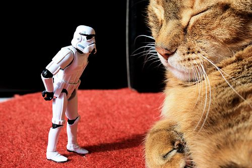 Here kitty kitty kitty!: Cats, Storm Troopers, Storms Troopers, Stars War, Photography Tips, Photo Projects, Animal, Stormtroopers 365, Starwars