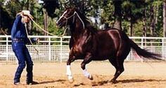Clinton Anderson: Lunging for repect