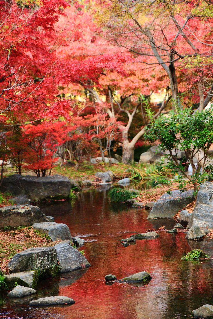 京都 梅小路公園 紅葉 水鏡 Japan,Kyoto,Umekoji-Koen-Park,autumn leaves,colored leaves