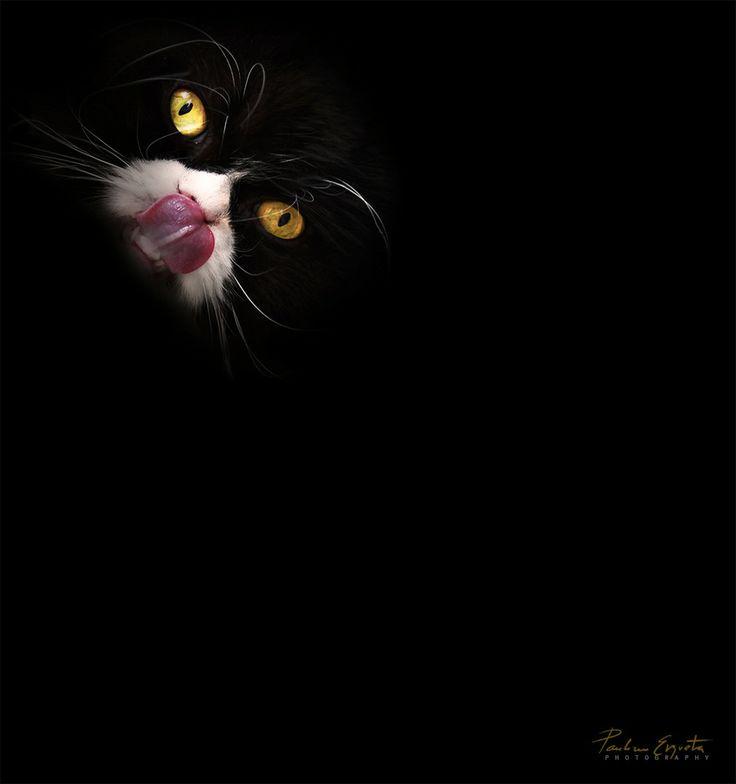 Cheshire Cat by Paulino Ergueta on 500px