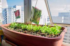 Os canteiros dessas mini-hortas podem ser feitos com materiais reaproveitados, como pneus, garrafas PET, canos de PVC, baldes, latas, telhas, entre outros.