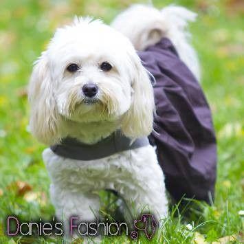 Elegáns lányka ruha. Egyedi alkalmakra és a hétköznapokra egyaránt.http://klassz.hu/termek/lanyka-kutyaruha-63628  Lány és fiú kutyáknak egyedi kialakítással. Prémium minőség, magyar termék.