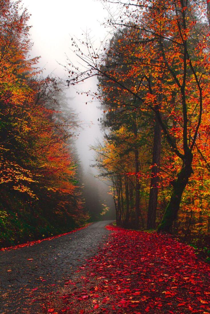 Rainy autumn road [unable to determine location or photographer]
