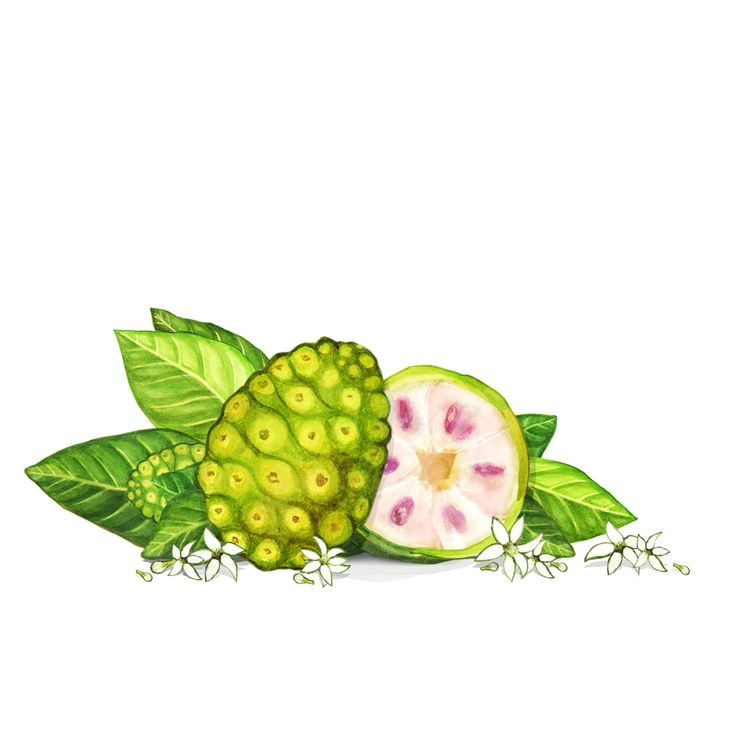"Our special ingredient ""Noni"" is derived from the Noni fruit and can be taken both internally and externally. It's a powerful superfood and antioxidant containing more than 100 vitamins & minerals and is known for its natural rejuvenating properties. That's why it's the hero ingredient in all KORA Organics products. #noniglow"