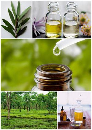 Tea tree olej (olej čajovníku australského) je nejužívanější přírodní antiseptikum - intimní hygiena, pomoc při infekci