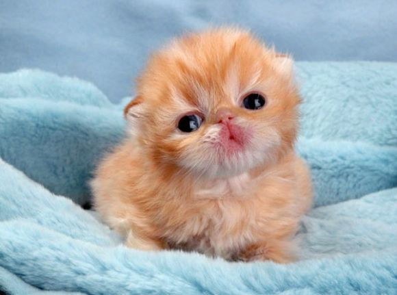 cute animal babies - Google Search