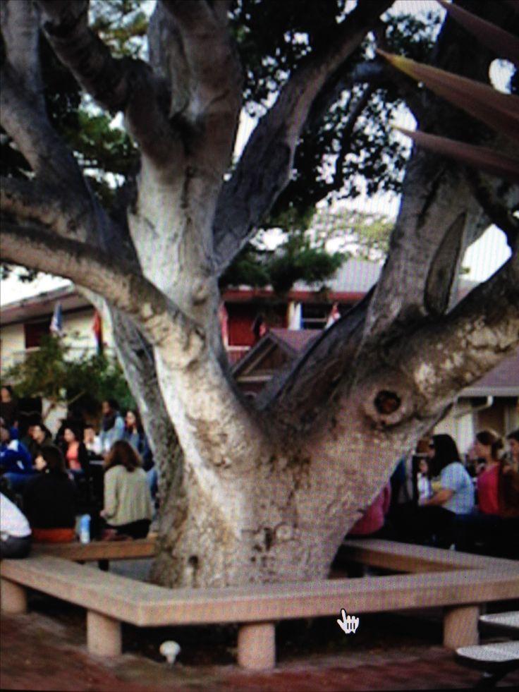 Banco ao redor da árvore