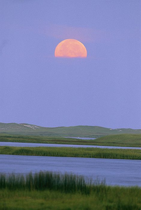 ✮ Moonrise Over A Wetland